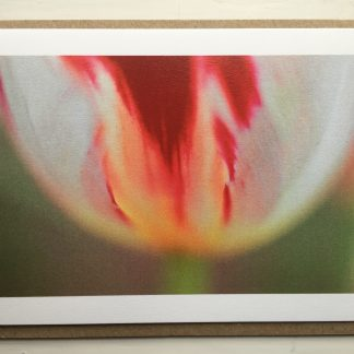 happy generation tulip card