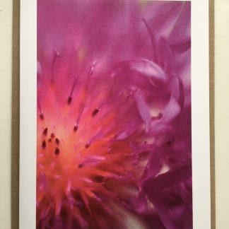 Centaurea photo card
