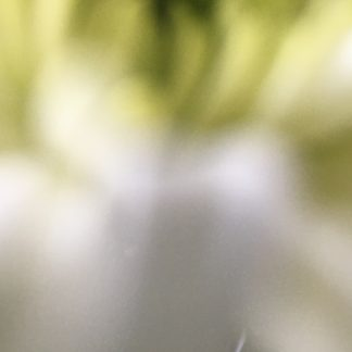 chrysanthemum 7 print